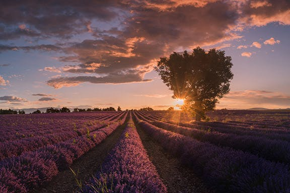 Provence Paradise | 6 Day Photo Tour in France