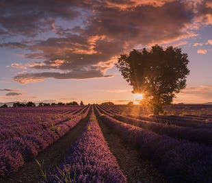 Provence Paradise   6 Day Photo Tour in France