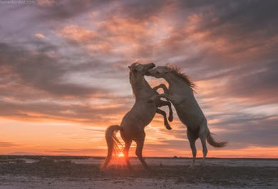 White Horses of Camargue | 5 Day Photo Tour in France