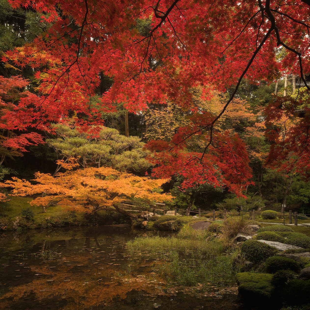 The colours of a Japanese autumn defy the imagination.