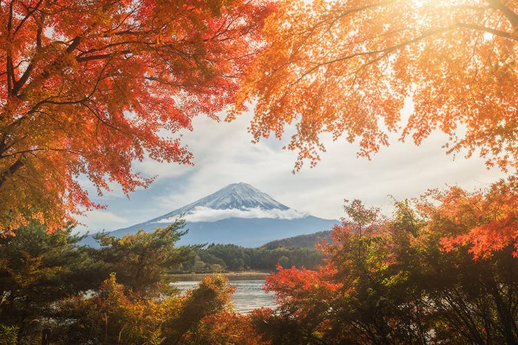 Mount Fuji, framed by the colours of fall.