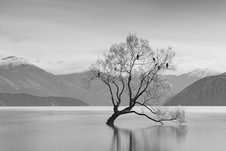 New Zealand Spring Photo Workshop