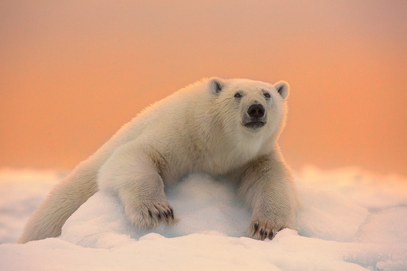 Arctic Photography Expedition to Svalbard - day 1