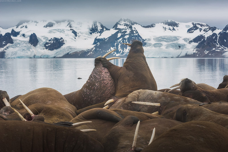Arctic Photography Expedition to Svalbard - day 9