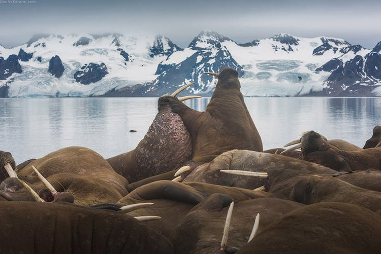 Arctic Photography Expedition to Svalbard