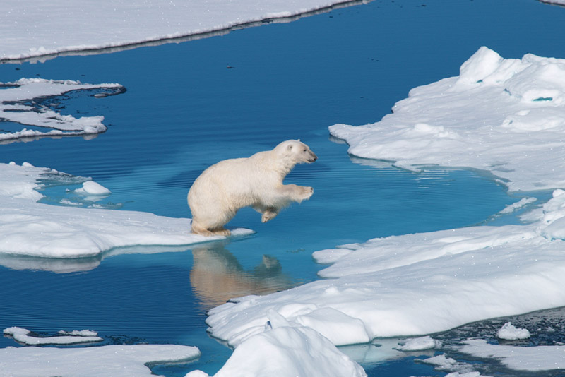 Arctic Photography Expedition to Svalbard - day 10