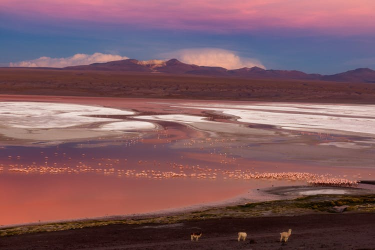 Laguna Colorada is otherwise known as the Red Lagoon.