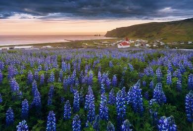 3-дневный фототур: мастер-класс по ландшафтной фотографии на Южном побережье Исландии