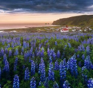กิจกรรมถ่ายภาพช่วงฤดูร้อน 3 วันในชายฝั่งทางใต้ของประเทศไอซ์แลนด์
