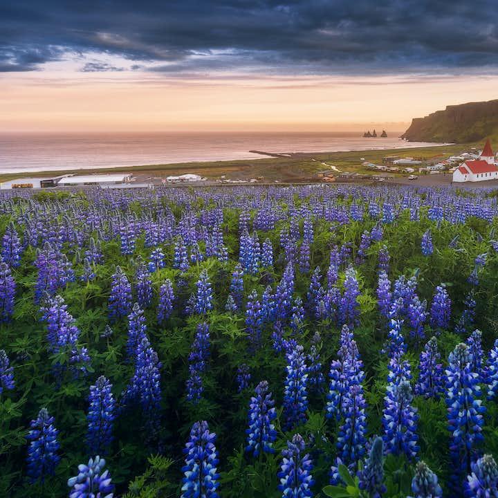 夏のアイスランド写真ワークショップツアー2泊3日|南海岸の絶景スポットを巡る