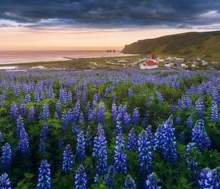 여름 아이슬란드 남부 해안 3일 출사 워크숍