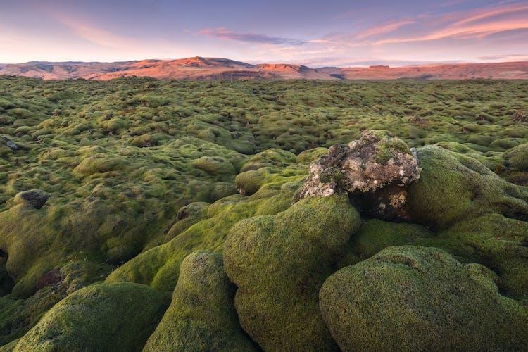 南海岸超凡脱俗的Eldhraun熔岩区。