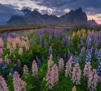 L'impressionnante montagne Vestrahorn dans le sud-est de l'Islande.