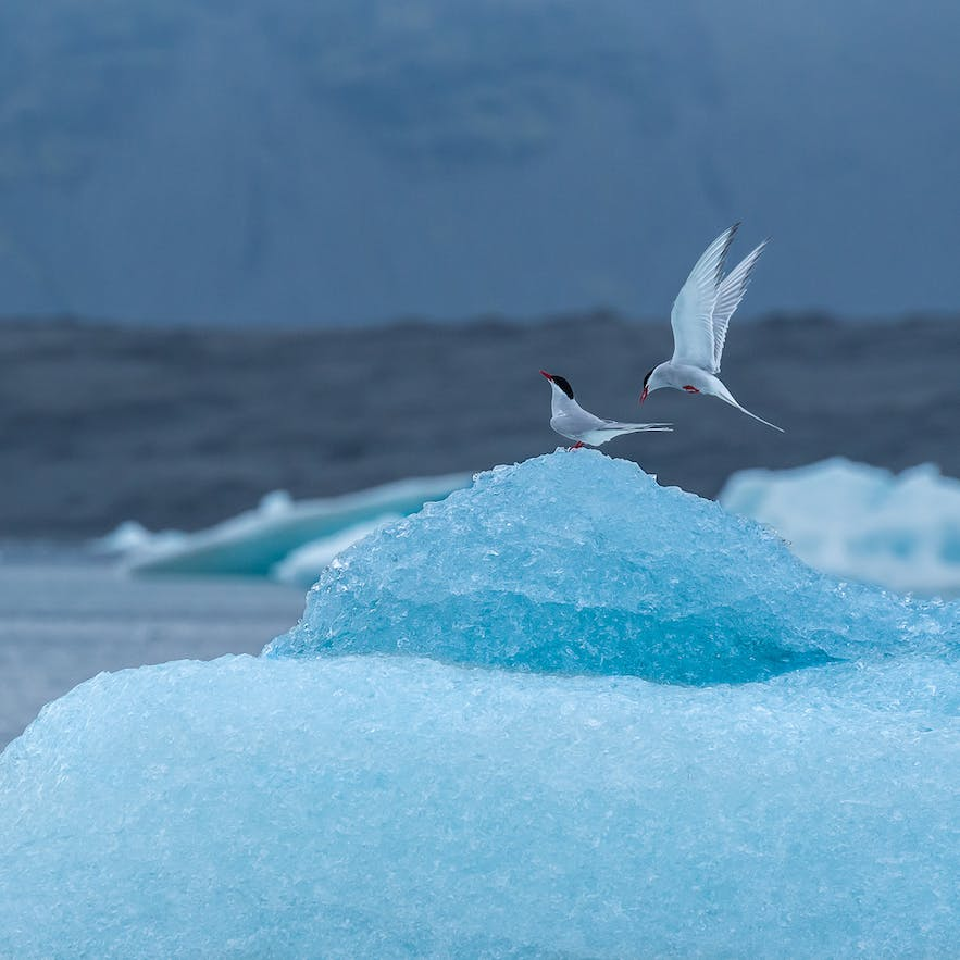 Dancing on Ice - Photo by Marc Pelissier
