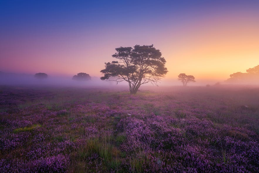 Mystery Morning. Photo by: 'Albert Dros'.