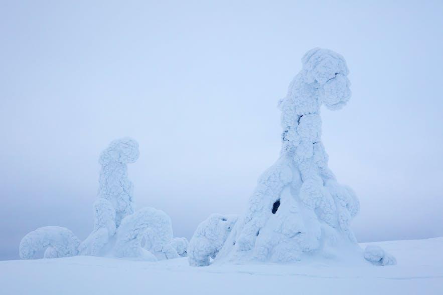 Winter in Riisitunturi. Photo by: 'Serena Dzenis'.