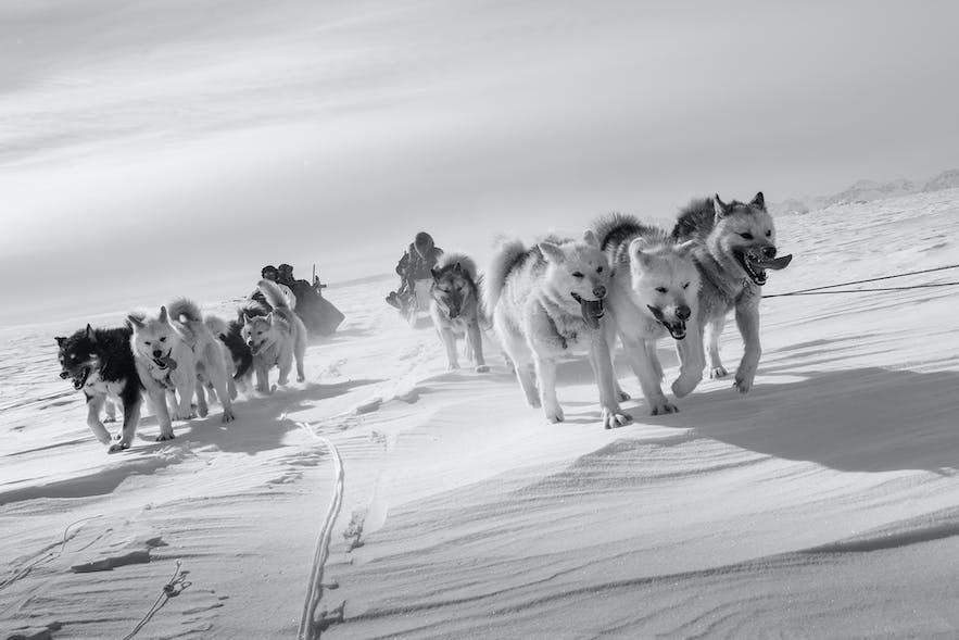 Sled Road Home. Photo by: 'Kerry Koepping'.