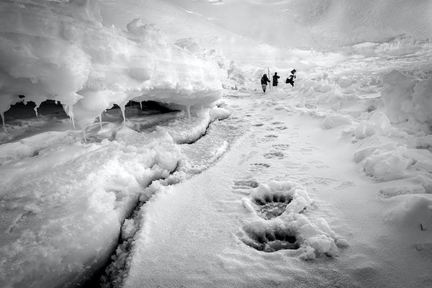 Polar Hunt. Photo by: 'Kerry Koepping'.