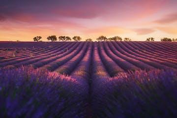 France_Provence.jpg