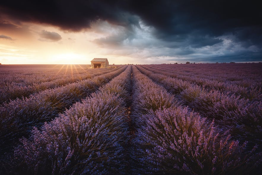 Lavender in Provence. Photo by: 'Julien Grondin'.
