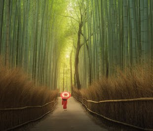 Japan Photography Workshop in Autumn