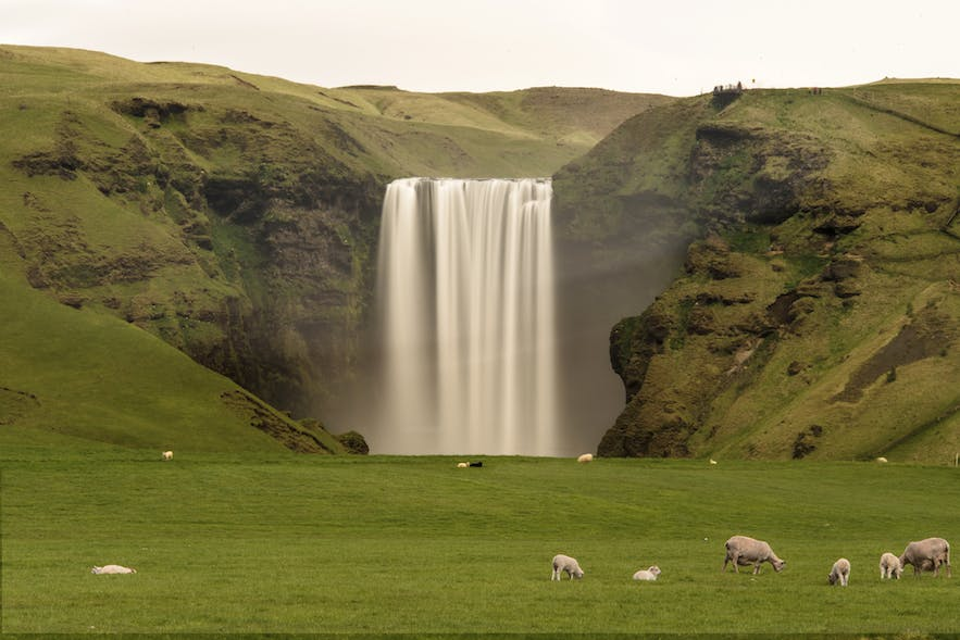 Skógafoss located on the south coast in Iceland