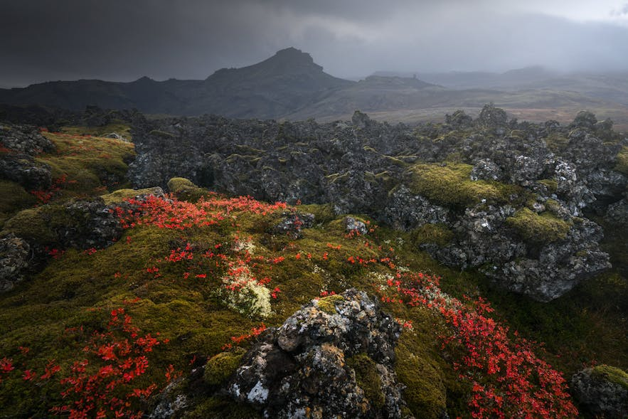 Lava field in Snaefellsnes