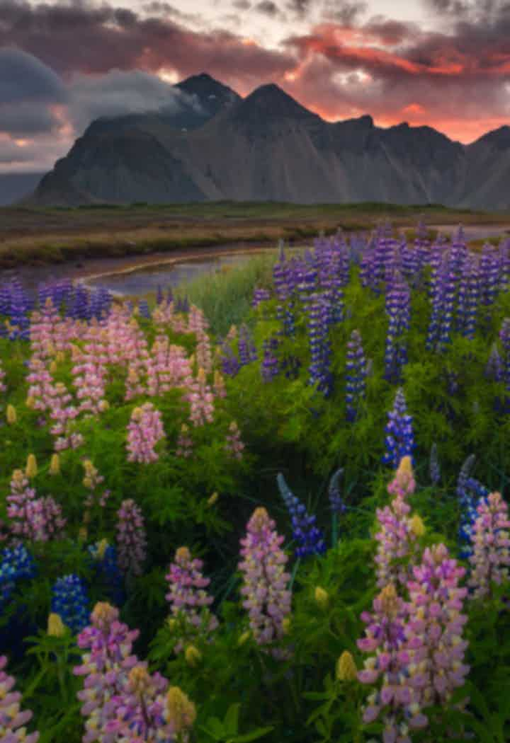 Talleres de verano en Islandia