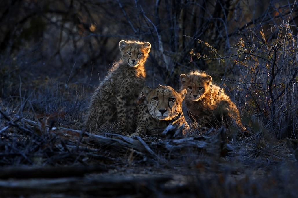 Namibia Wildlife Photography Tour - day 1