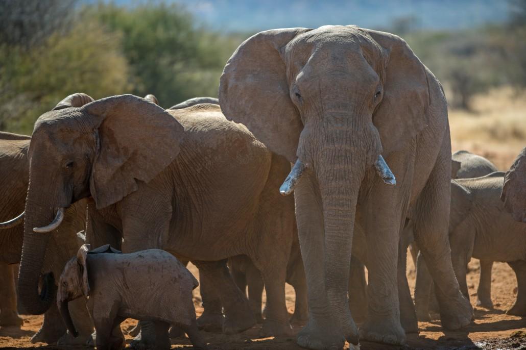 Namibia Wildlife Photography Tour - day 2
