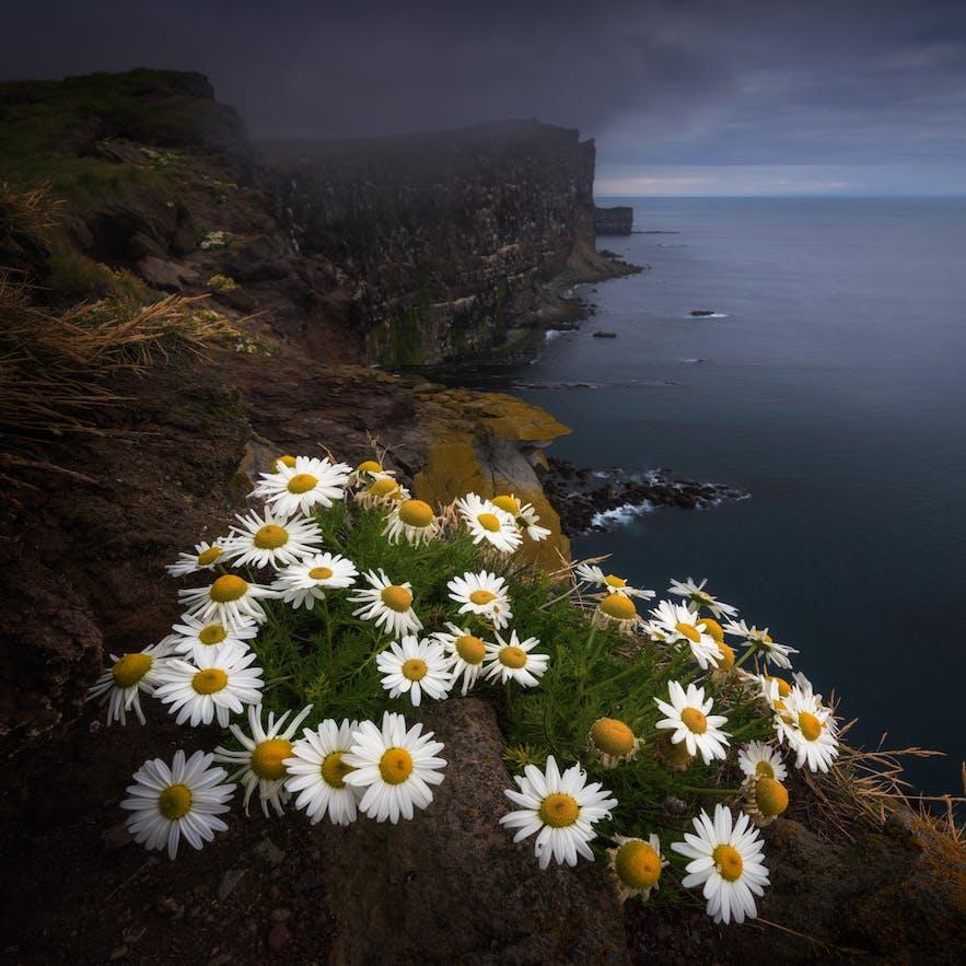Westfjords - Image By Albert Dros