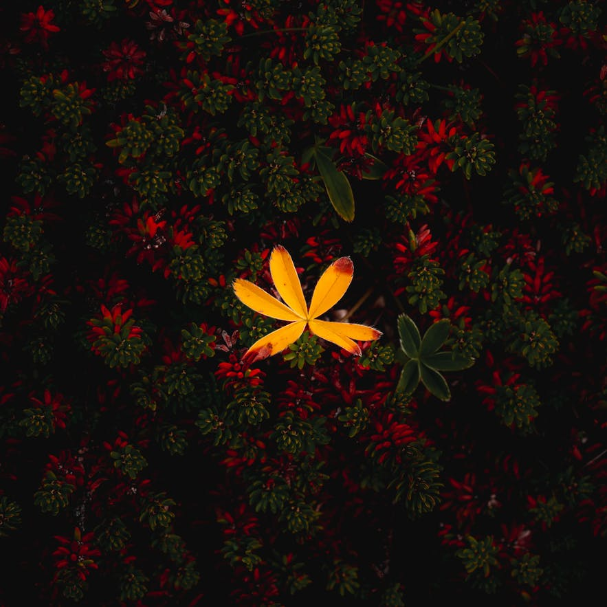 Autumn Flowers - Image By Albert Dros