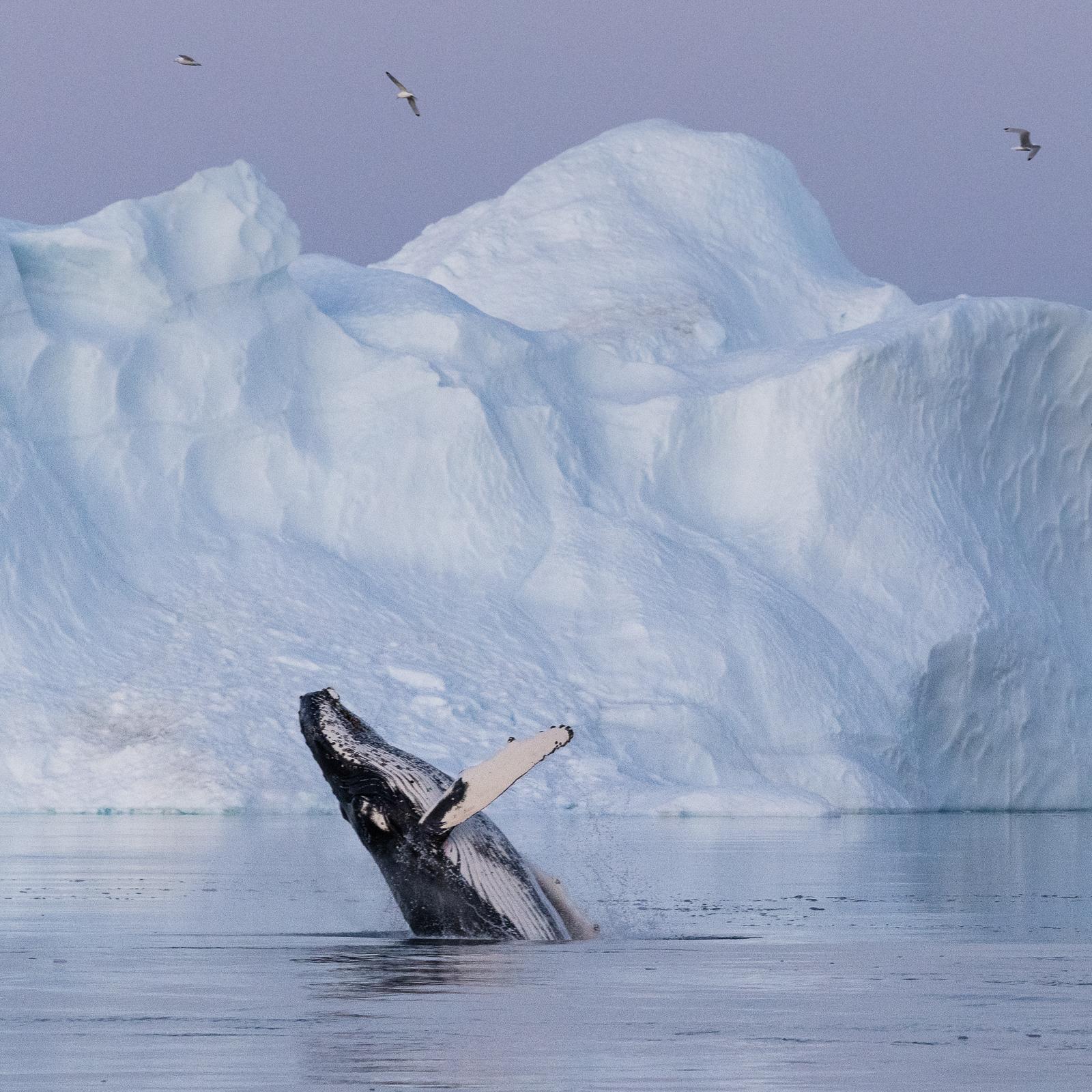 West Greenland Photo Workshop in Disko Bay | Sailing on Schooner - day 3