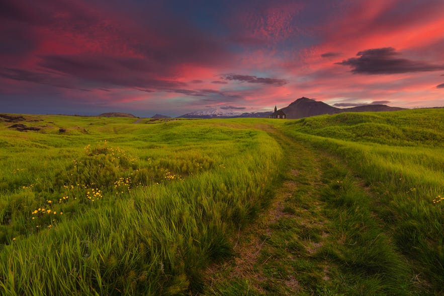 Where to Photograph Lupines & Wildflowers in Iceland