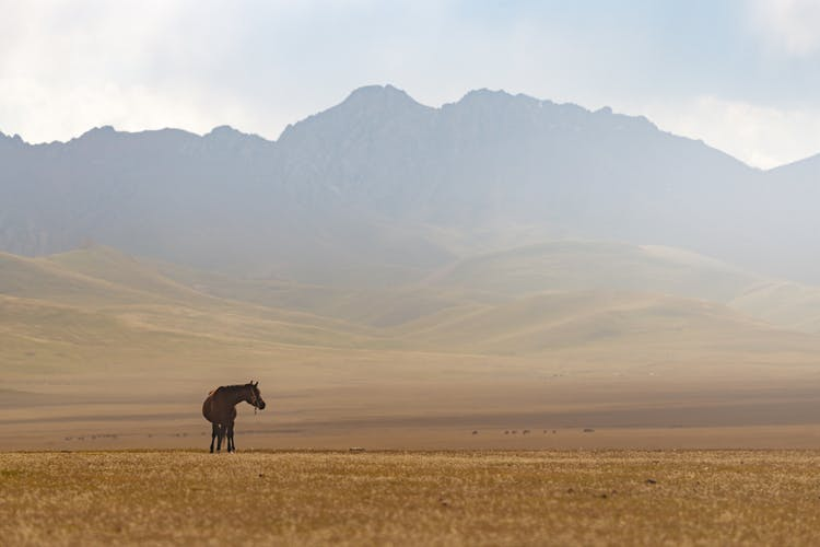 11 Day Kyrgyzstan Photography Tour