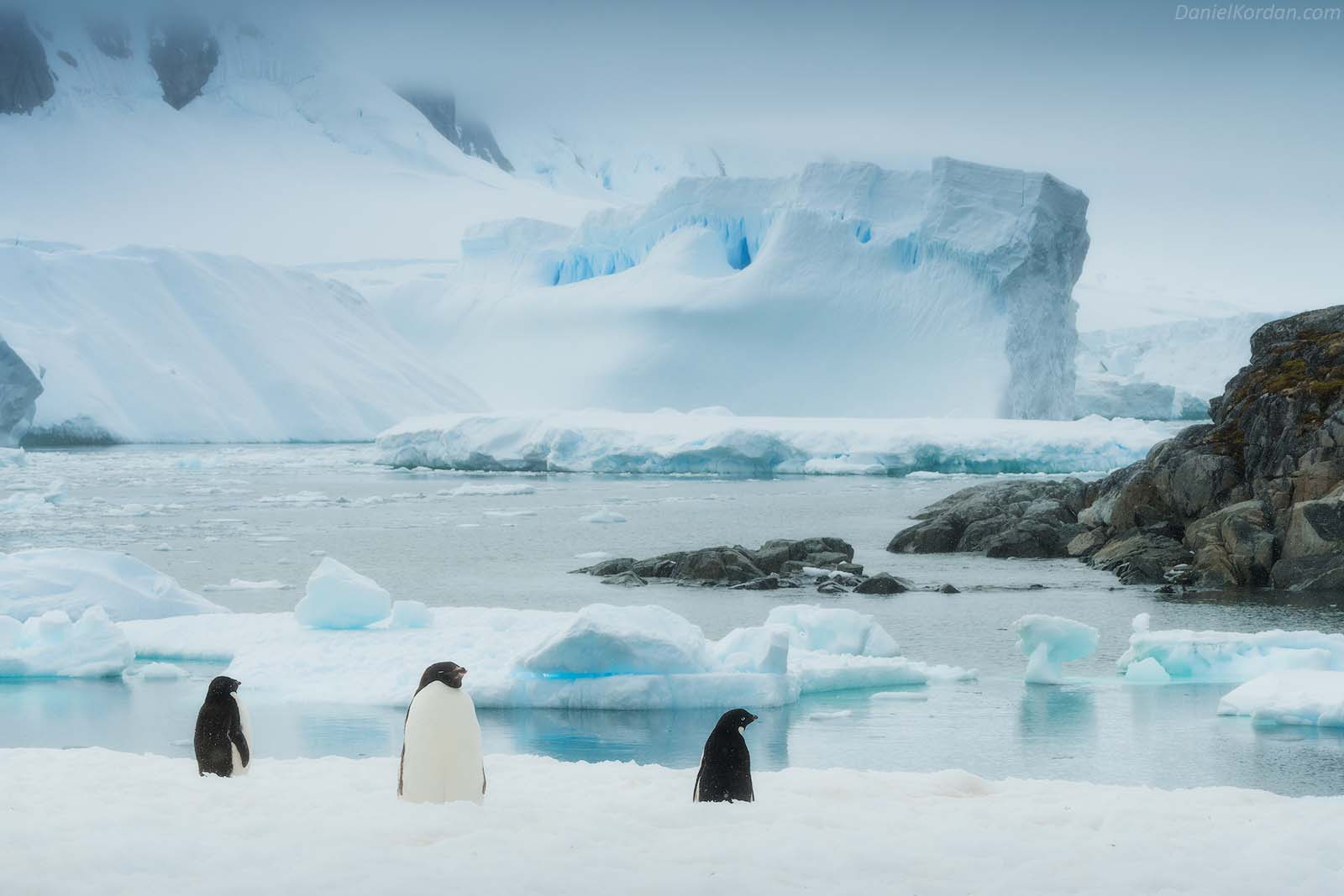 22 Day Antarctica Photography Expedition on Bark Europa - day 20