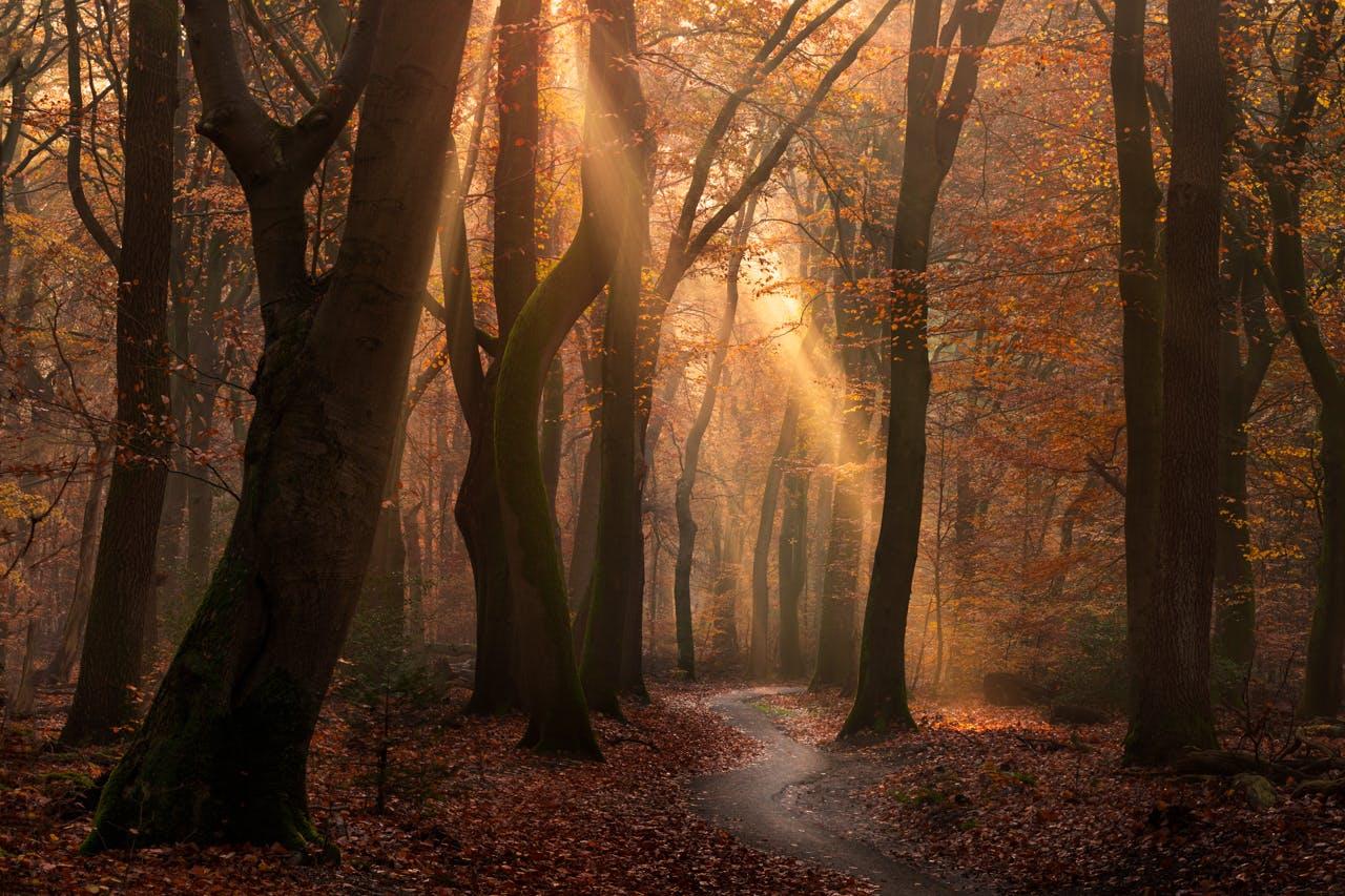 forest-albertdros17.jpg