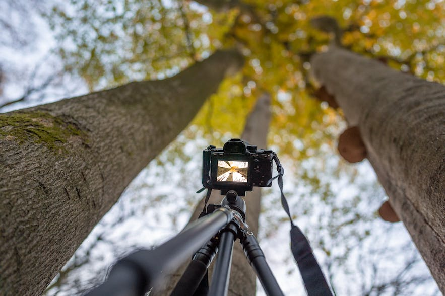 The Ultimate Forest Photography Guide
