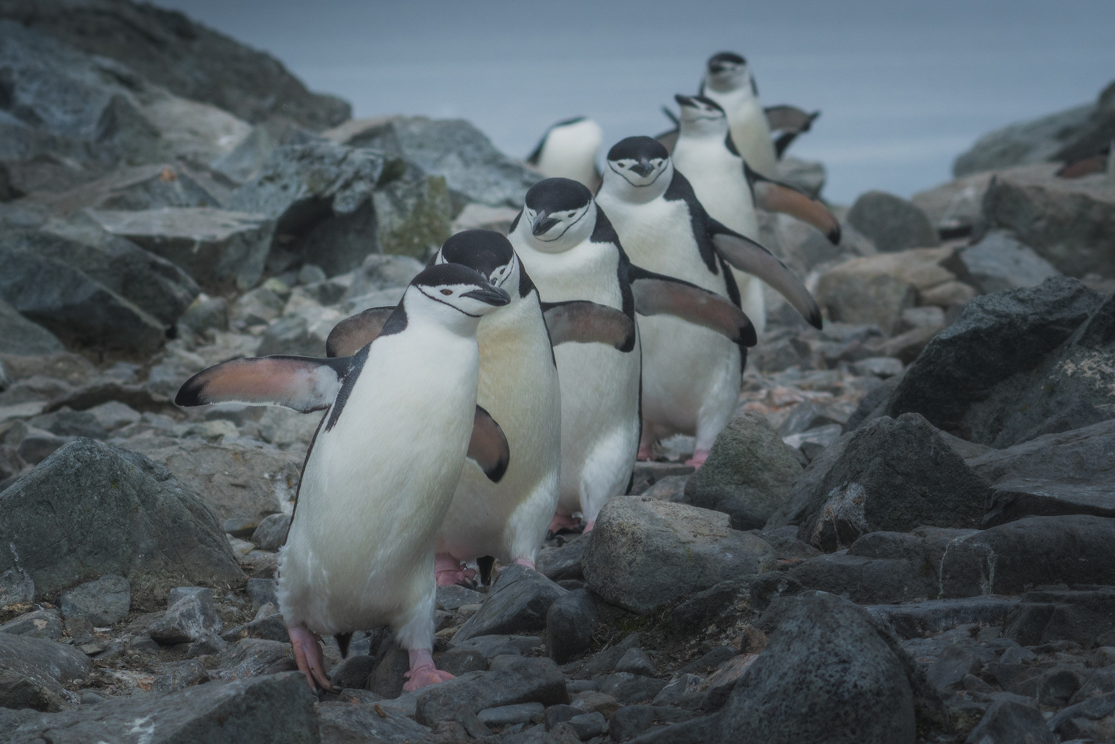 The Ultimate Guide to Photographing Penguins in Antarctica