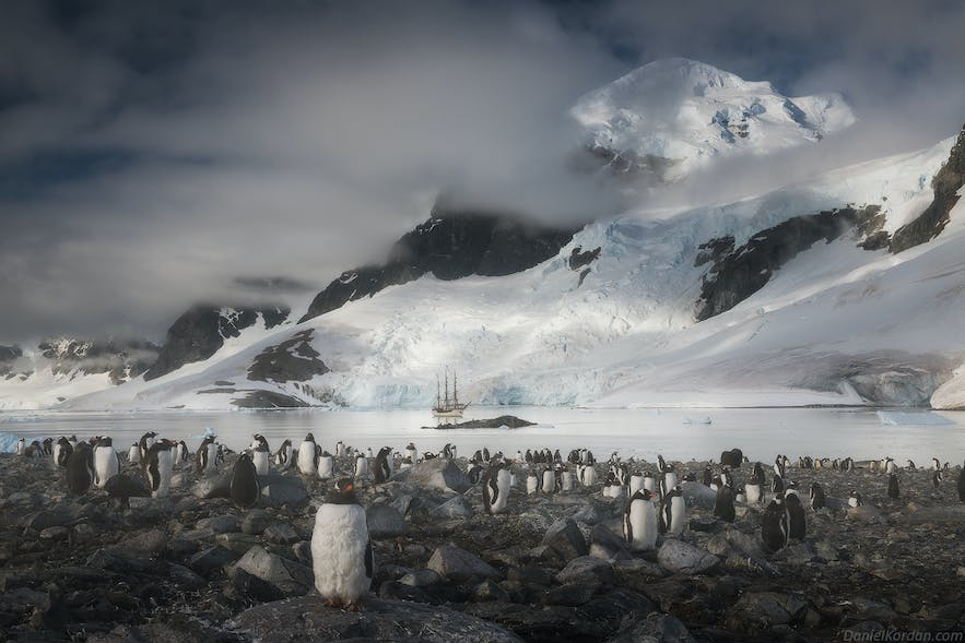 Penguin colonies in Antarctica can number in the millions of individuals.