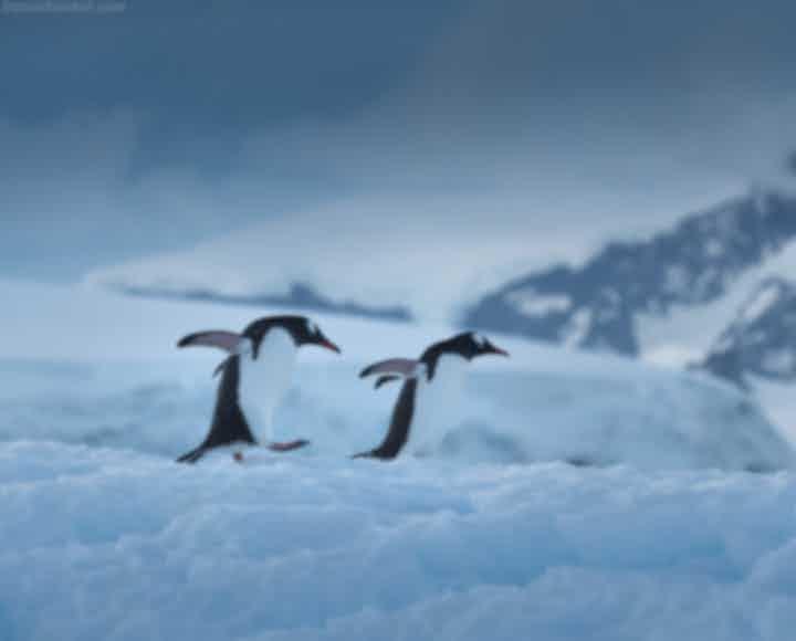 Antarctica Photography Tips