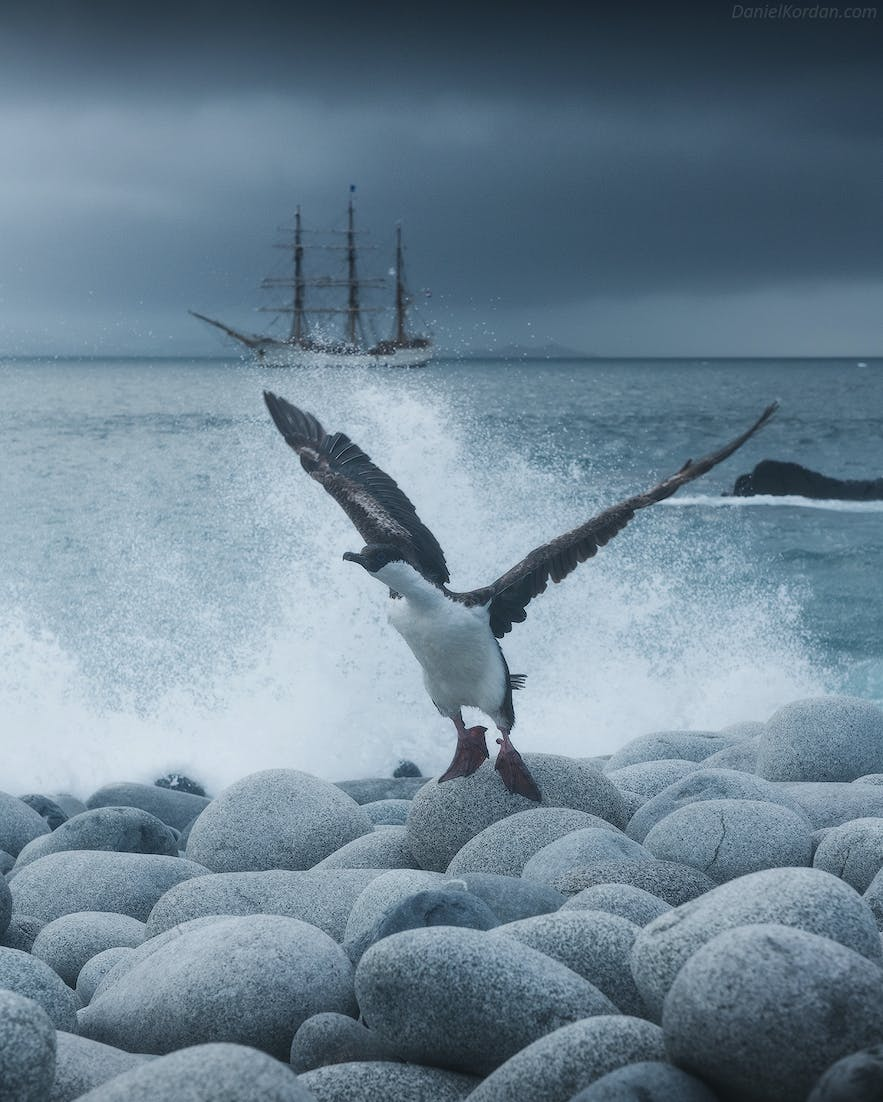 Many birds migrate to Antarctica in summer to feed.