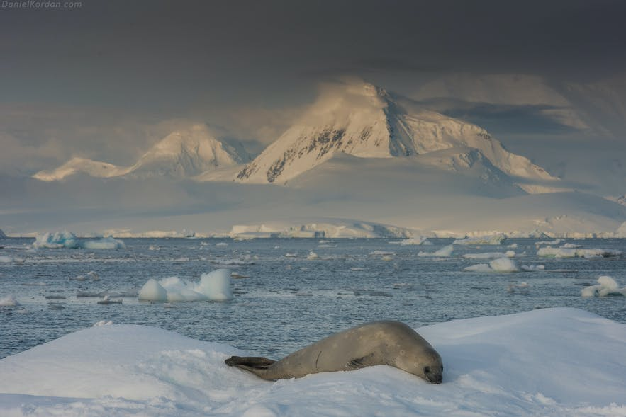 A seal chills in Antarctica.
