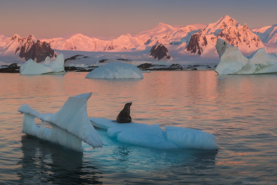 Ross seals are the least understood of the Antarctic seals.
