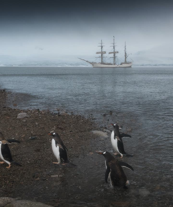 Post-producton techniques can help your refine pictures of the wildlife of Antarctica.