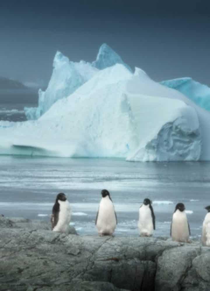 Antarctica Photography Tours & Workshops