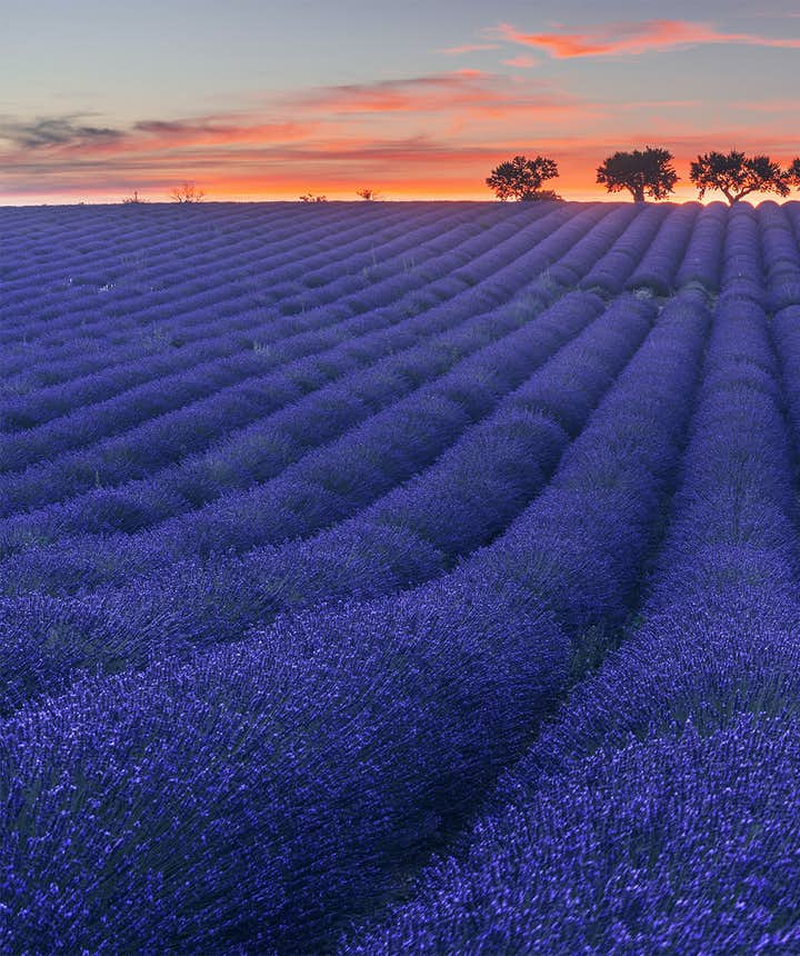 Ultimate Photography Guide to the Lavender Fields of Provence