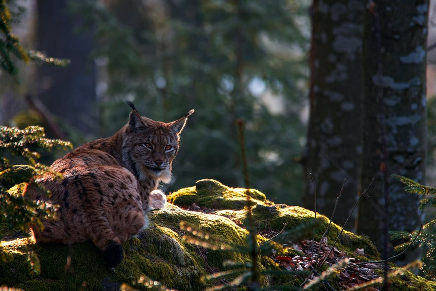 The Best Lenses for Wildlife Photography