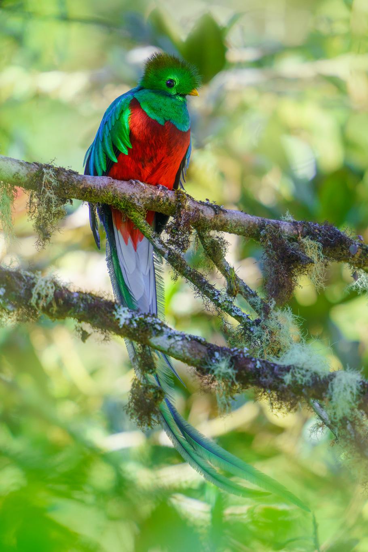 12 Day Costa Rica Wildlife & Landscape Photography Workshop - day 8