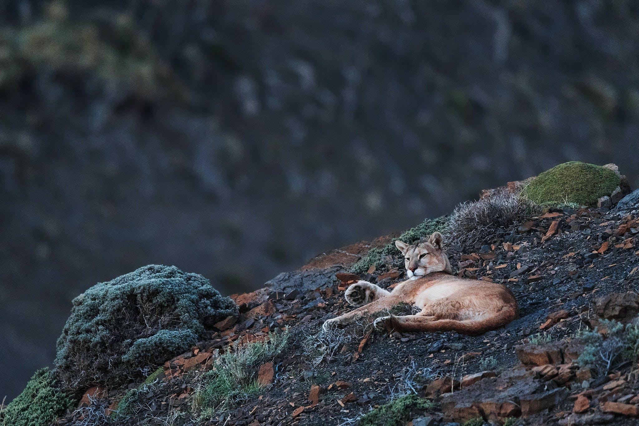 leonardopapera-wildlifephotographytips2.jpg